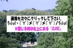 蜻蛉池公園(あじさい)1                                                   ココをクリック↑ ↑ ↑