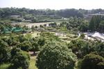 蜻蛉池公園(あじさい)21
