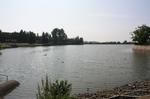 蜻蛉池公園(あじさい)22