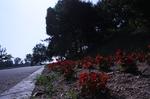 蜻蛉池公園(あじさい)23