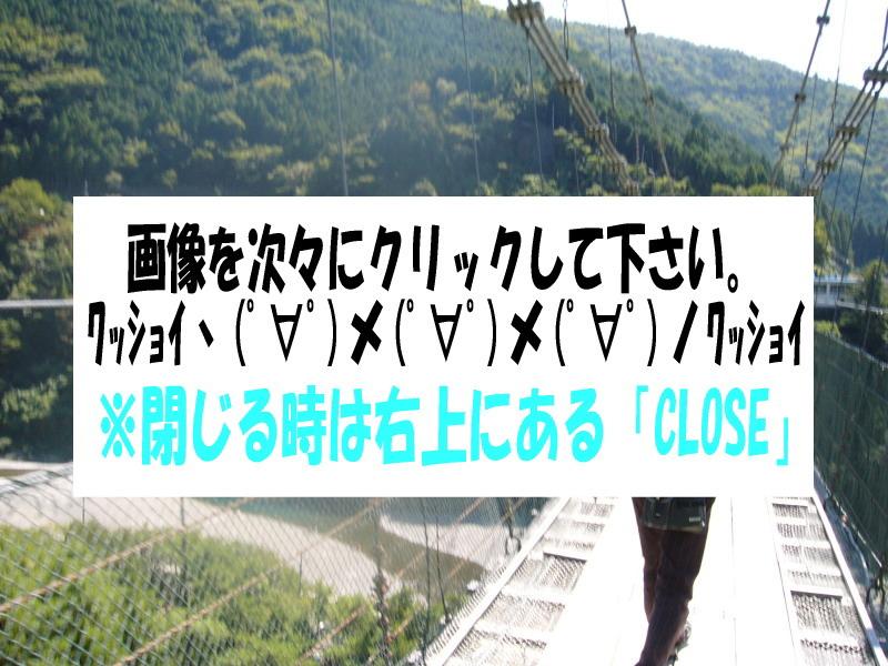 谷瀬の吊り橋                                                           ココをクリック↑ ↑ ↑
